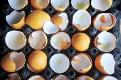 eggshell Στοκ Φωτογραφία