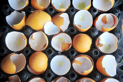 Eggshell Stock Photography