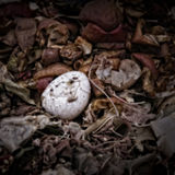 An eggshell on a Compost Heap Royalty Free Stock Photography