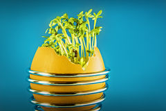 Eggshell with cress Royalty Free Stock Photo