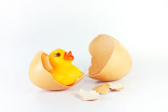 Eggshell and duck Stock Image