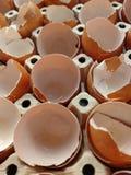 eggshell fotografía de archivo libre de regalías
