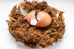 Eggshell in the nest Stock Photo