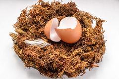 Eggshell in the nest Stock Image