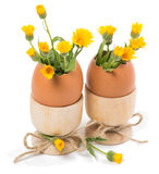 Eggshell with spring flowers in wood eggcups Royalty Free Stock Photos
