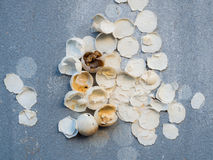 Eggshell of unidentified animal on the the concrete rough wall. A new life is born, eggshell of unidentified animal on the concrete rough wall Stock Photo