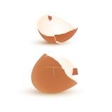 Eggshell vector. Illustration of eggshell vector on white background Stock Image