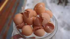 Eggshells κήπων οφελών κοχυλιών αυγών εδαφολογικά λίπασμα στοκ εικόνα