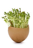 Eggshells and Garden cress Stock Image