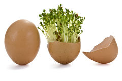 Eggshells and Garden cress Royalty Free Stock Image