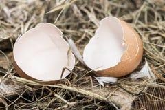 Eggshells Stock Images