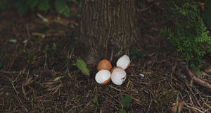 Eggshells in the undergrowth Stock Photo