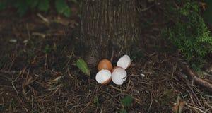 Eggshells in the undergrowth Stock Photo