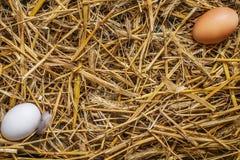 2 eggss лежа в сене Стоковое фото RF