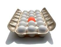 eggstraordinary的鸡蛋引人注意 库存照片