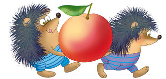 Egiki. Two hedgehogs carrying big apple Stock Photos