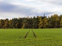 Egin field in autumn. Stock Photos