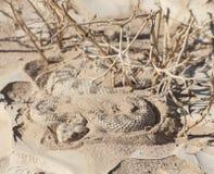 Egipcjanin żmii pustynny wąż w piasku Obrazy Stock