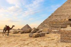 Egipcjanin pustynia: ostrosłupy i wielbłąd fotografia stock