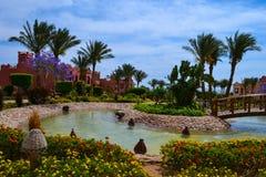 Egipt, Czerwony morze Zdjęcia Stock