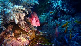 Egipt Czerwony morze Big Brother obrazy royalty free