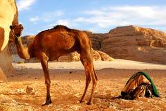 Egipt Desert Stock Image