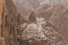Egipt góry Synaj pustynia, Barwiony jar Zdjęcie Royalty Free