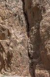 Egipt góry Synaj pustynia, Barwiony jar Fotografia Royalty Free