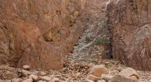 Egipt góry Synaj pustynia, Barwiony jar Zdjęcia Royalty Free