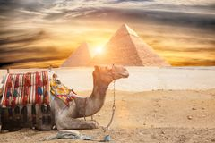 Egipt Kair, Giza - Obrazy Stock