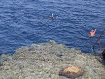 Egipto Los lingüistas de Snork examinan el arrecife de coral almacen de video