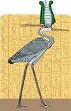 Egipto santo ibis en fondo del color Fotografía de archivo libre de regalías