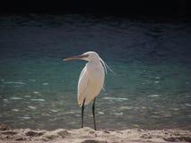 Egito - pássaro na praia foto de stock royalty free