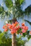Egito, plantas exóticas. Fotos de Stock