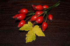 Eglantine, rosehip Obraz Stock