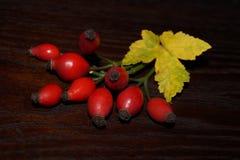 Eglantine, rosehip Obrazy Stock