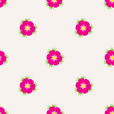 Eglantine seamless pattern Stock Photography