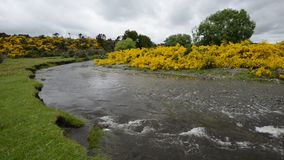Eglinton河弯曲在草原谷在令人沮丧的云彩下 股票录像
