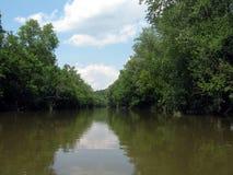 Żeglować w rzece przez lasu Fotografia Stock