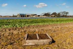 Egmond-binnen, die Niederlande - April 2016: Hölzerne Birnenkiste auf Feld des Blumenbauernhofes nahe Erntezeit stockbild