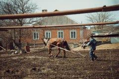 Egpaard Stock Afbeelding