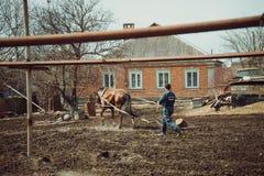 Egpaard Royalty-vrije Stock Foto