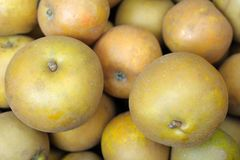 Free Egremont Russet Dessert Apples Royalty Free Stock Image - 8933616
