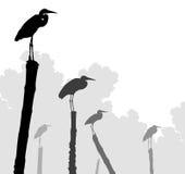 Egret żerdzie Fotografia Royalty Free