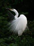 egret ангела Стоковое Фото