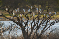 Egret в полете, Стоковая Фотография RF