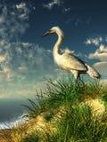 Egret на травянистой дюне бесплатная иллюстрация