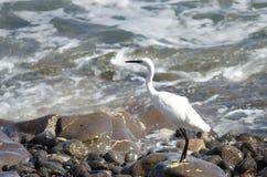 egret немногая стоковые фото
