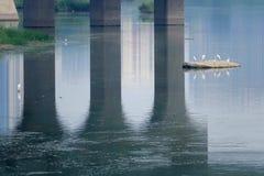 egret немногая Стоковое Фото