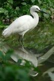 egret птицы стоковые фото